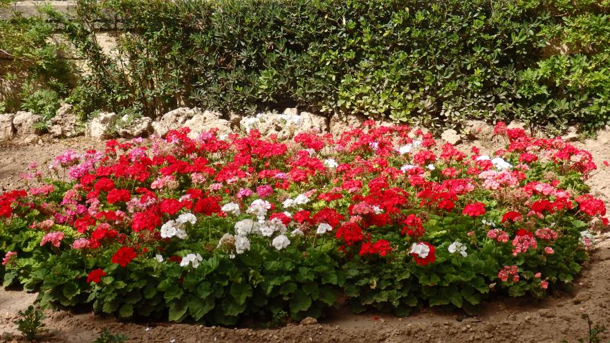 I Love the Flowerbeds in the Argotti Gardens