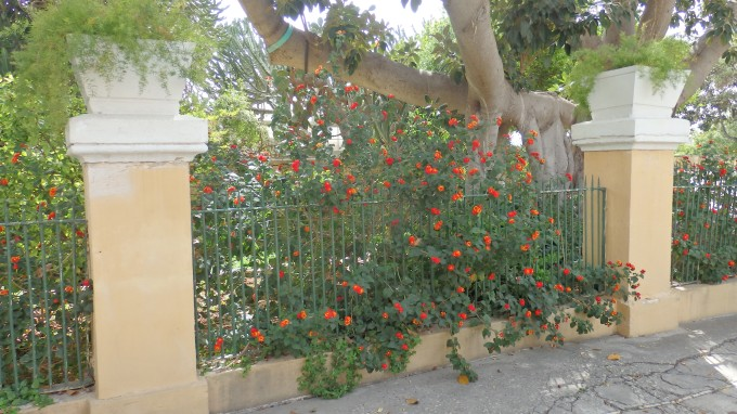 """Bushes With Flowers Growing """"Out of the Box"""" in Argotti Gardens"""