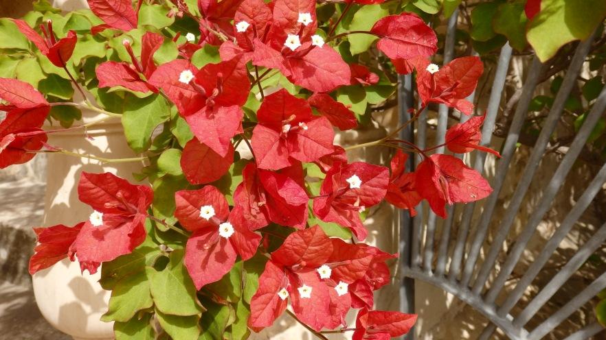 Flower Power at the Argotti Gardens
