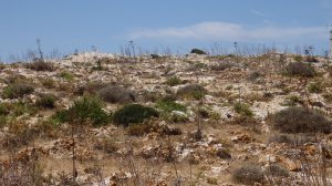 Barren Land, Dingli Cliffs, Dingli, Malta